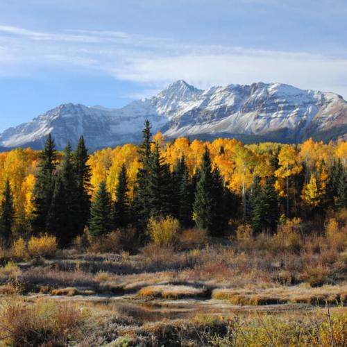 105 Wilson Peak Aspen and meadow