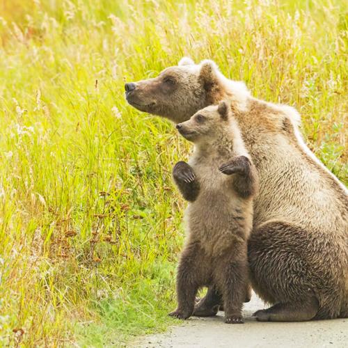 Cub Helping Momma Watch