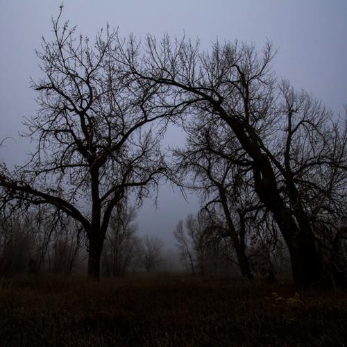 Running Deer Oak Trees in Fog