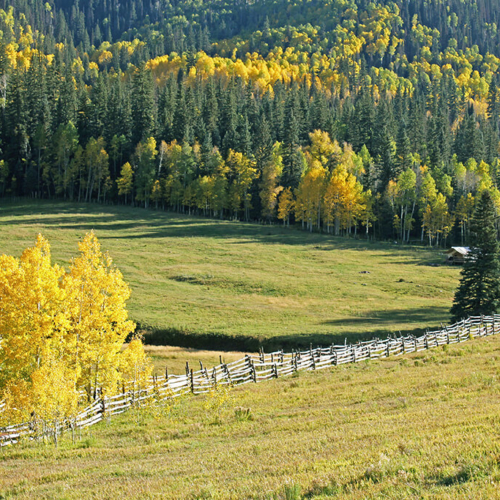 The Perfect Mountain Meadow